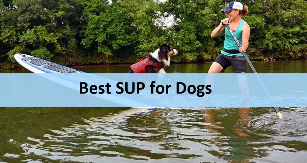 Best stand up paddleboards for dogs
