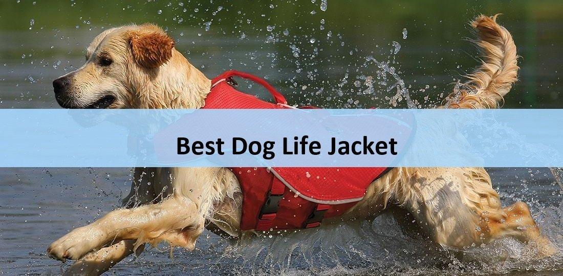 Best Dog Life Jacket for the Money: Unbiased List